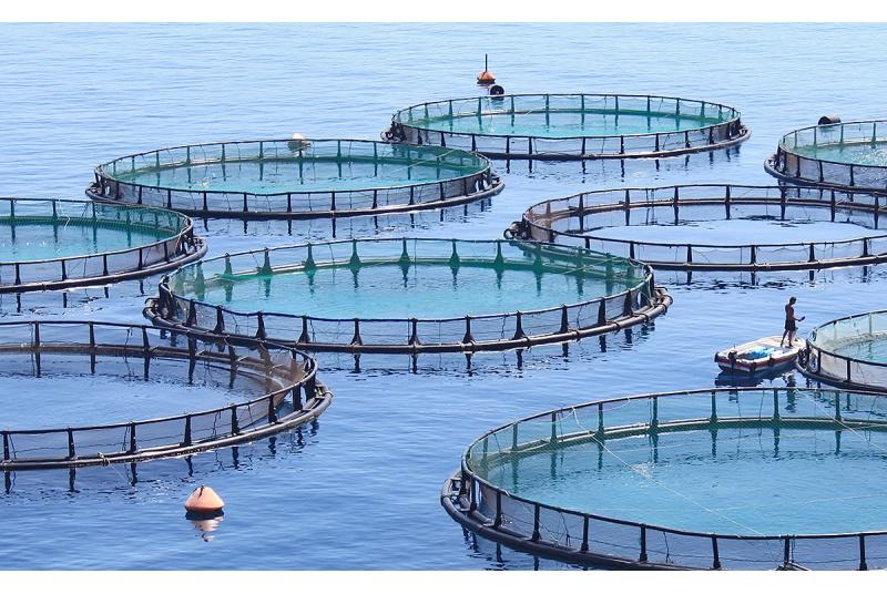 Darbas Norvegijoje žuvies fabrike
