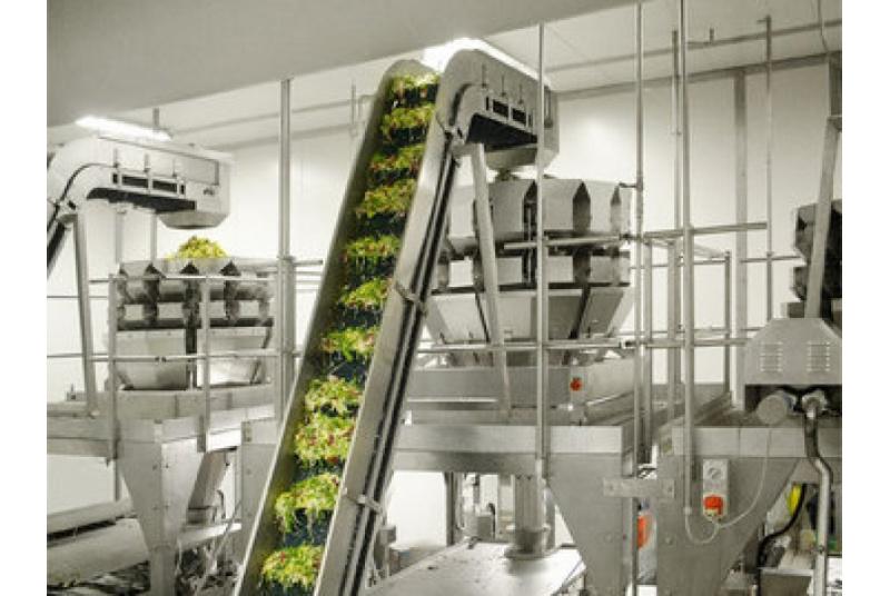 Linijos operatorius (-ė) prie daržovių pakavimo-pjaustymo